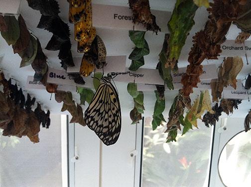 Inside the butterfly case.