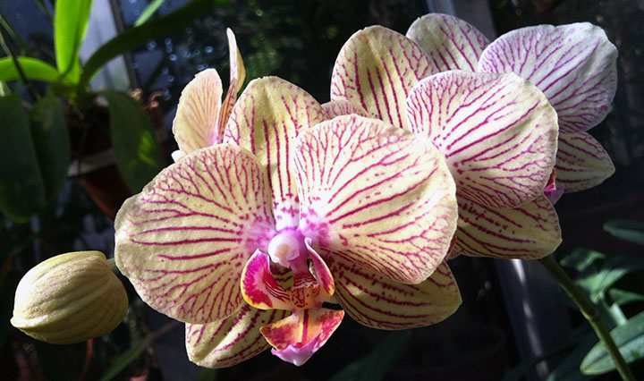 A stem of orchid blooms.