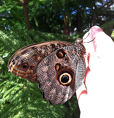 A giant owl on my hand, for scale. This variety has noticeable weight to it, and scritchy feet.