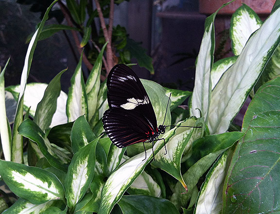 Butterfly on foliage
