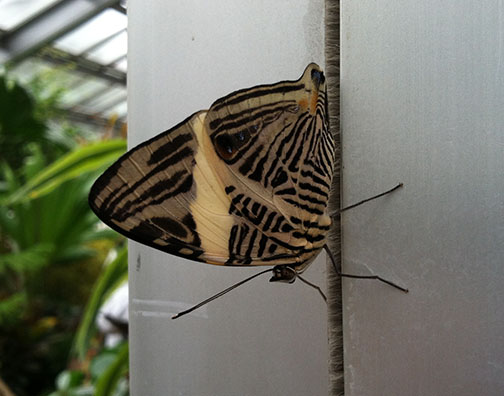 The very striped and patterned underside of a butterfly's wings