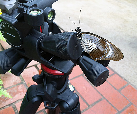 Butterfly on camera equipment