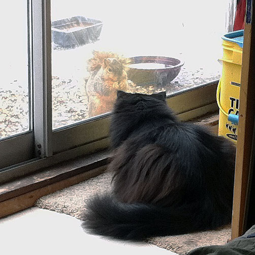 My cat Daryl watching a squirrel through a sliding glass door