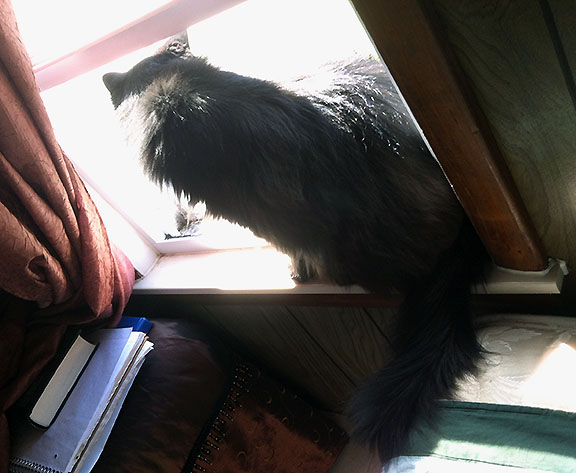 Cat Daryl sitting in open window