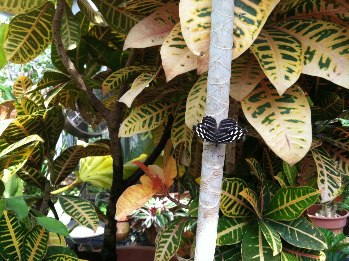 Dow Gardens – Beth\'s Planet