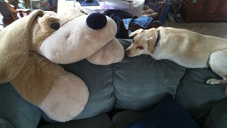 Blonde dog lying along back of loveseat face to face with giant stuffed dog