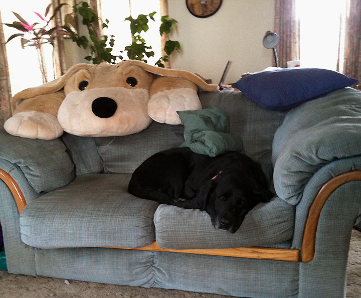 Black Lab chilling on loveseat with giant stuffed dog looking over the back