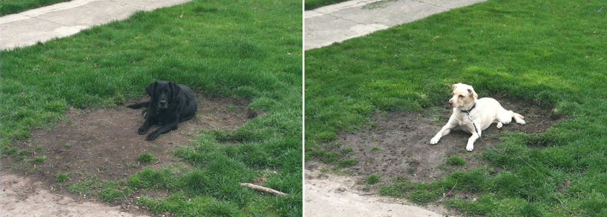Two photos of dogs in the same hole.