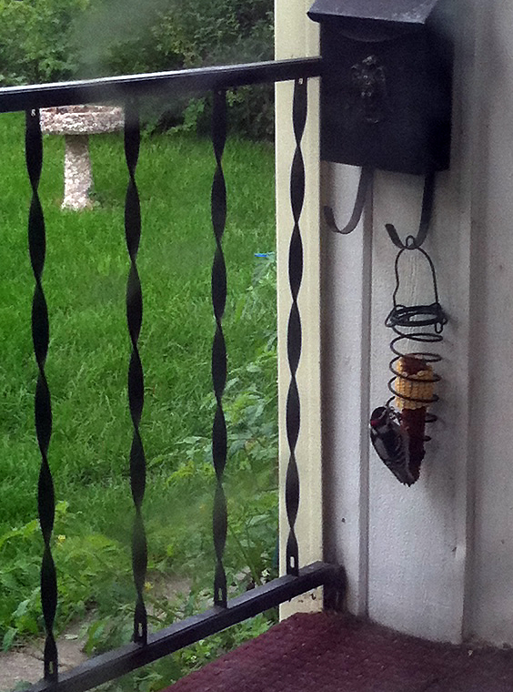 woodpecker on corn cob
