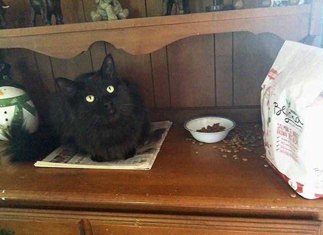 Daryl on newspaper next to food