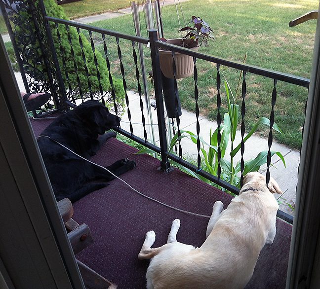 dogs lying on porch