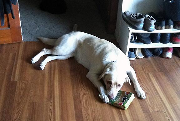 dog chewing box