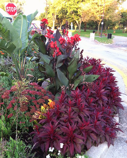 red flower bed