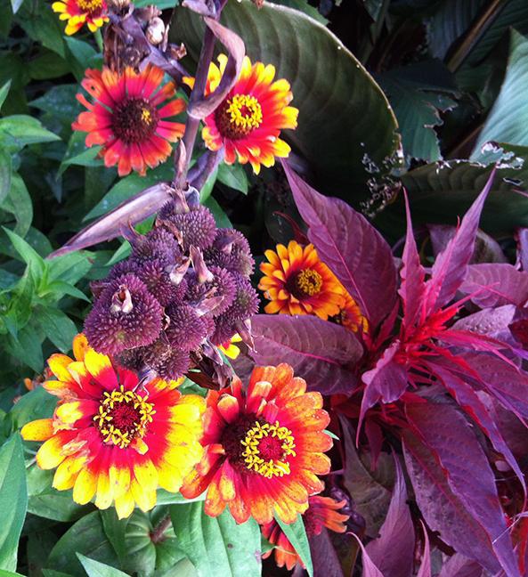 plant closeups