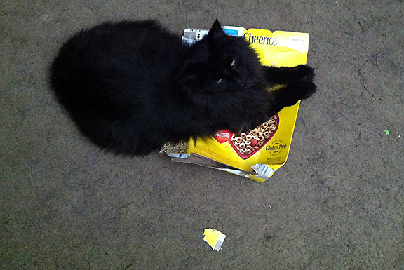 cat lying on a box