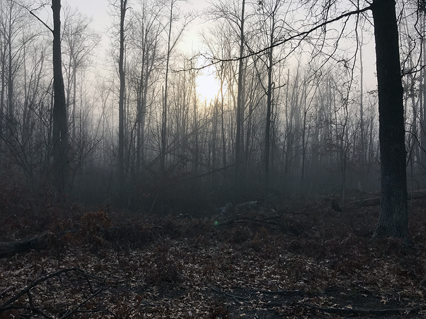 View of woods in fog
