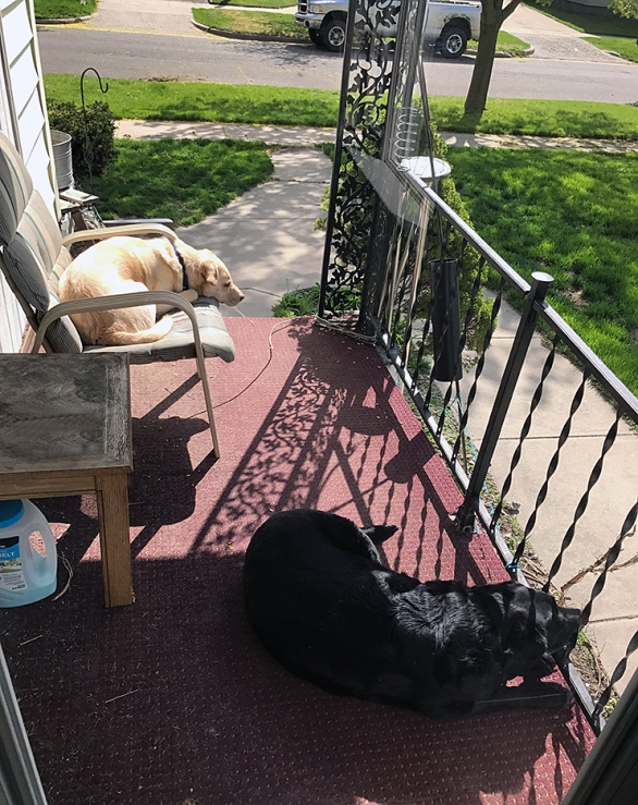 Abbey and Maggie soaking up the sun on the porch