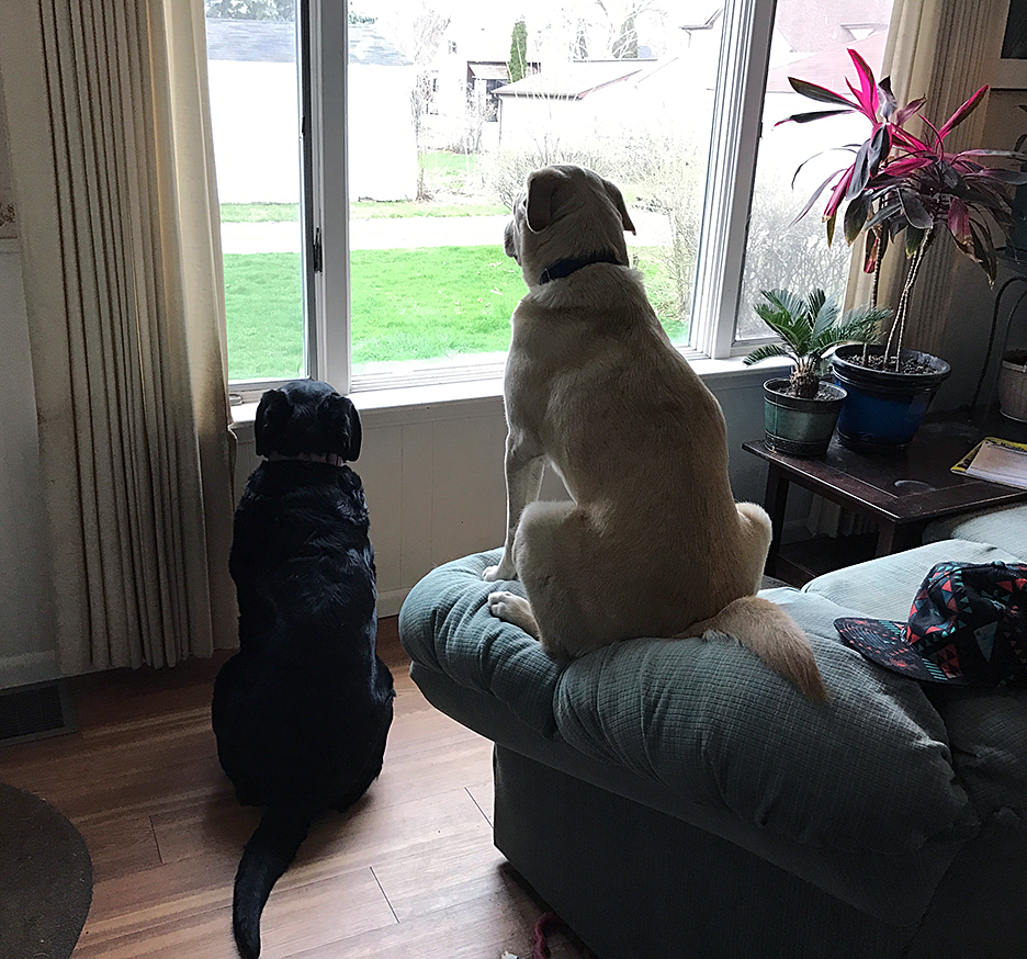Maggie and Abbey staring out the driveway waiting for my husband