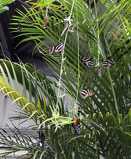 Butterflies roosting on a hanging plant